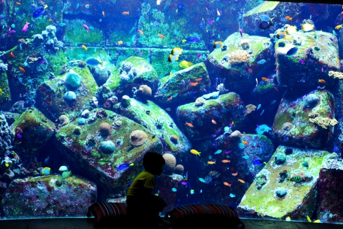 Atlantis the Palm - Lost Chambers Aquarium