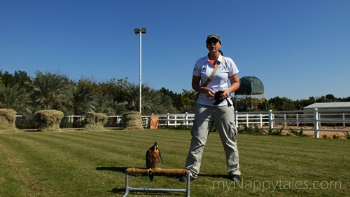 Falcon show at Al Tamimi Stables