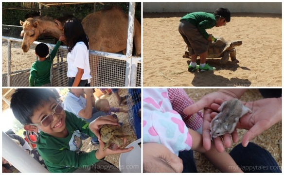 Petting Zoo Al Tamimi Stables