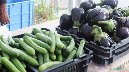 TFMOTT_Vegetables