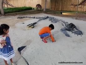dinosaurpark-bones
